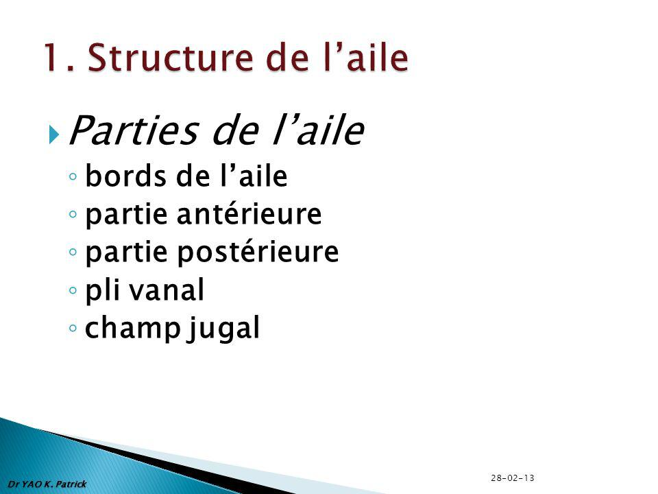 Parties de l'aile 1. Structure de l'aile bords de l'aile