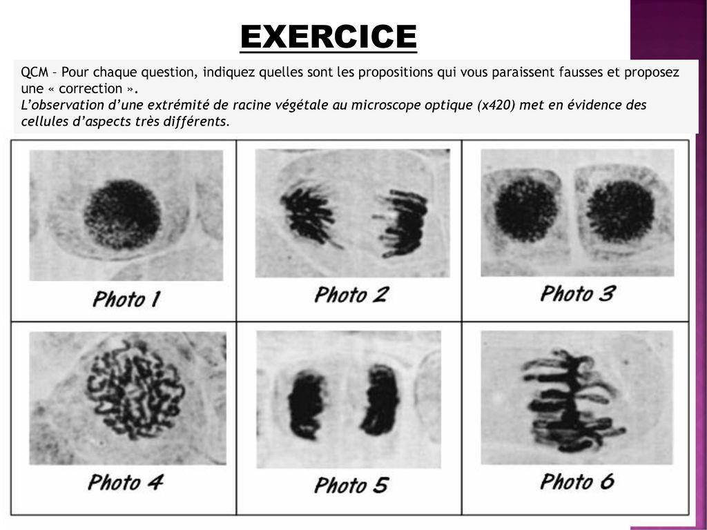 La reproduction conforme de la cellule et la r plication - Quel sont les symptome d une fausse couche ...