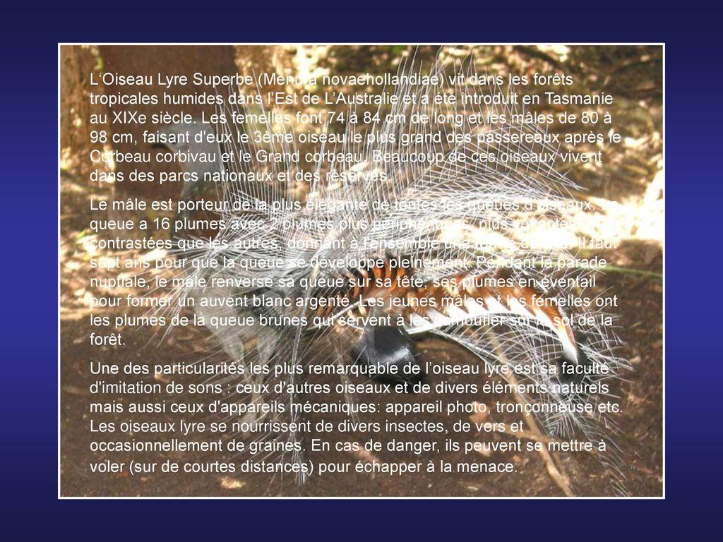 animaux fascinants animaux fascinants l zard armadillo cordylus cataphractus ce l zard vit. Black Bedroom Furniture Sets. Home Design Ideas