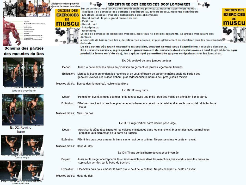 Schma Des Diffrentes Parties Muscles Du Dos Ppt Tlcharger Circuit Training Prsentation Et Exemples D39entrainement 4 Ex