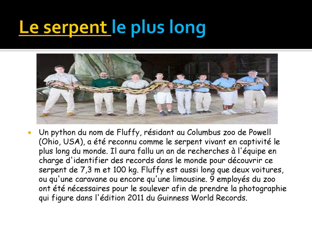 Le serpent le plus long