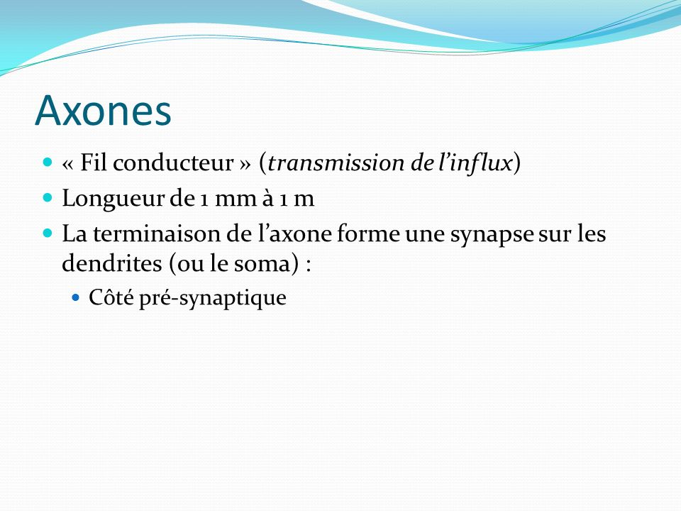 Axones « Fil conducteur » (transmission de l'influx)