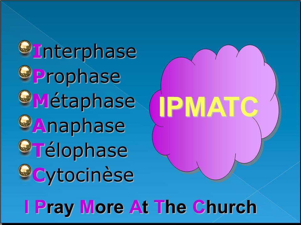 IPMATC Interphase Prophase Métaphase Anaphase Télophase Cytocinèse