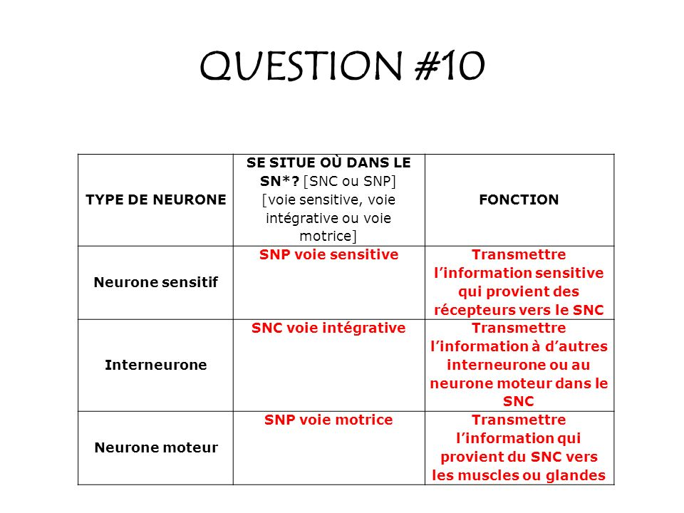 QUESTION #10 TYPE DE NEURONE SE SITUE OÙ DANS LE SN* [SNC ou SNP]