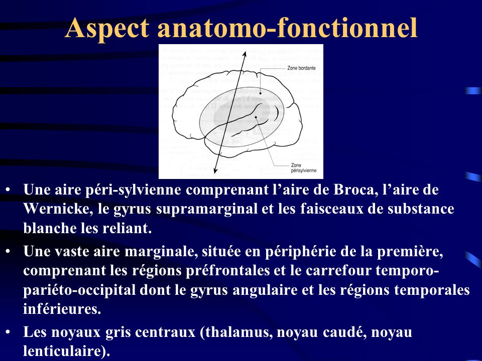Aspect anatomo-fonctionnel