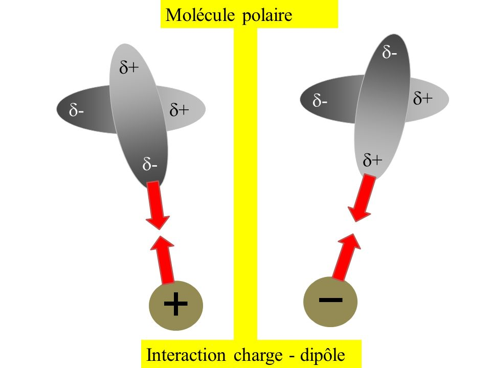 Molécule polaire d- d+ d- d+ d- d+ d+ d- Interaction charge - dipôle