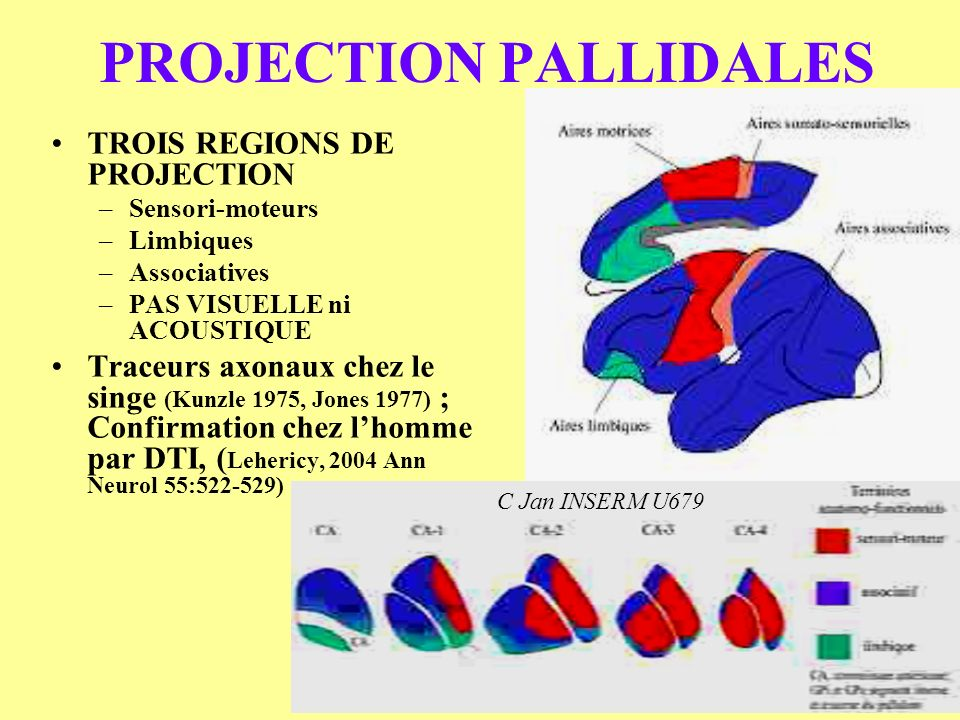 PROJECTION PALLIDALES