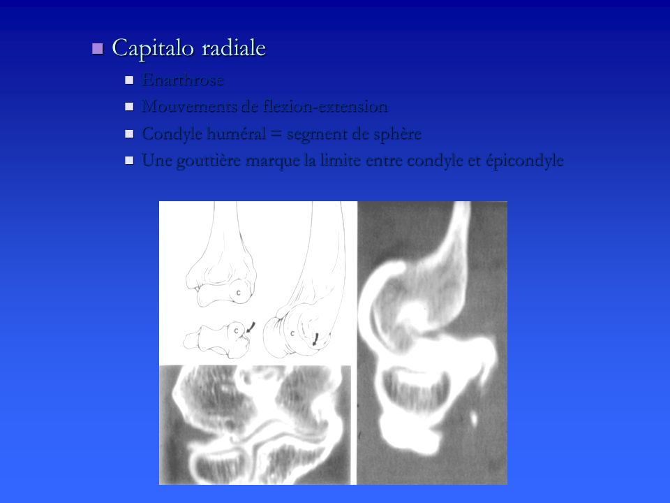 Capitalo radiale Enarthrose Mouvements de flexion-extension