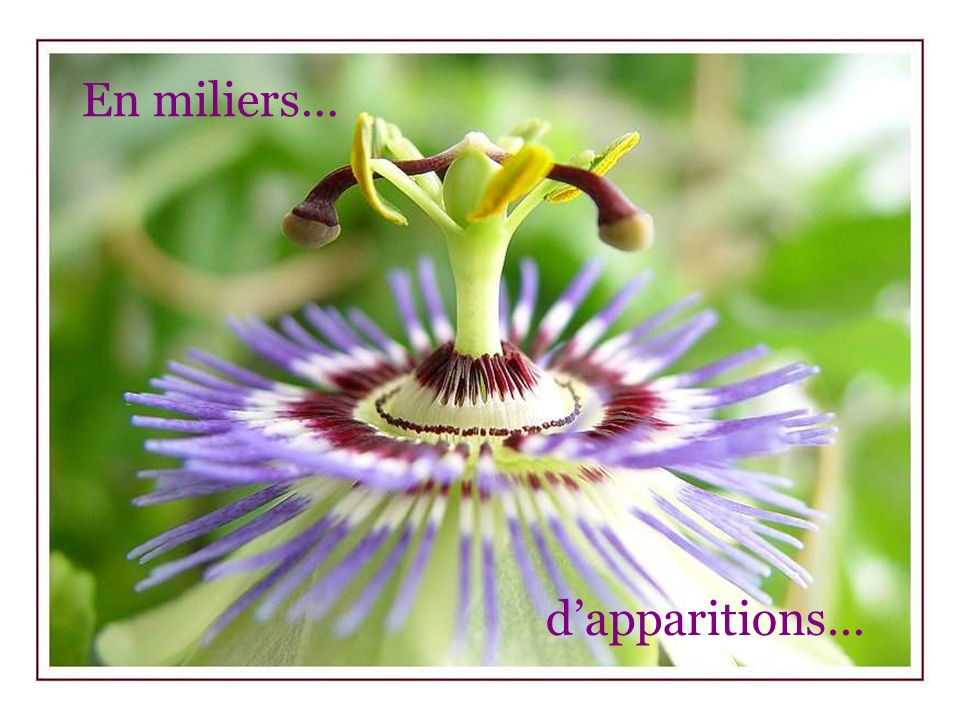 En miliers… d'apparitions…