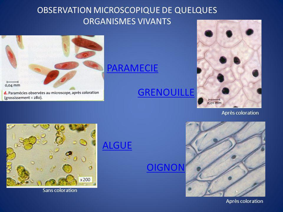 OBSERVATION MICROSCOPIQUE DE QUELQUES ORGANISMES VIVANTS