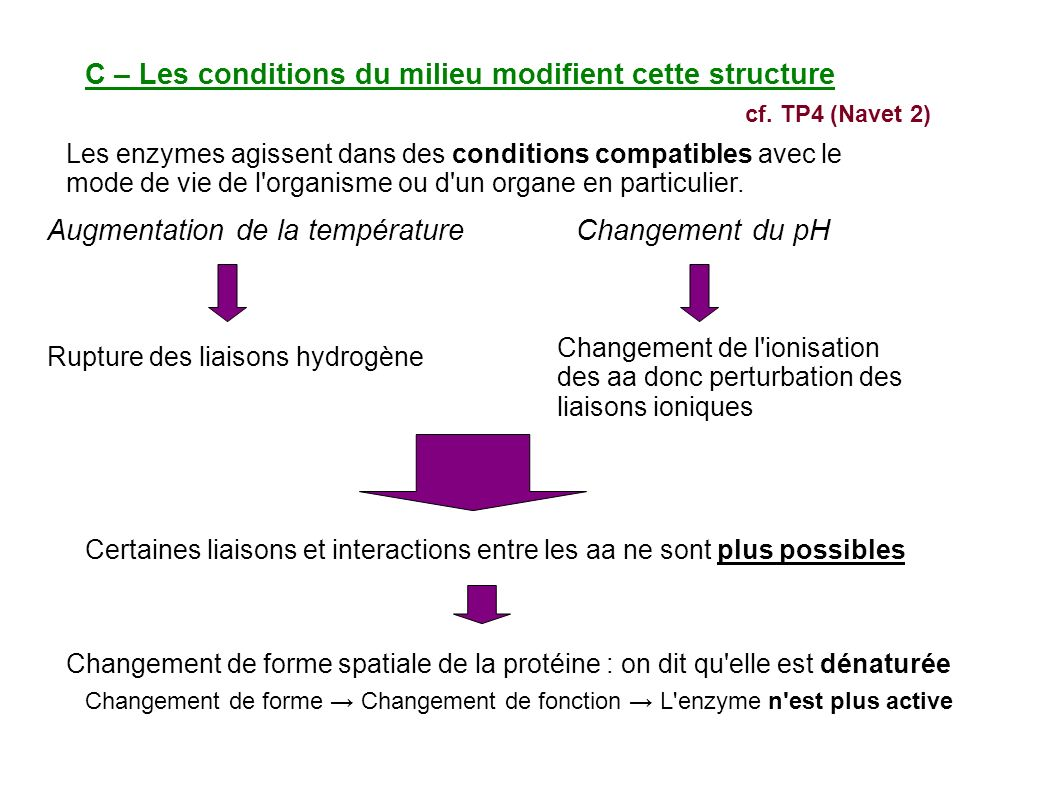C – Les conditions du milieu modifient cette structure