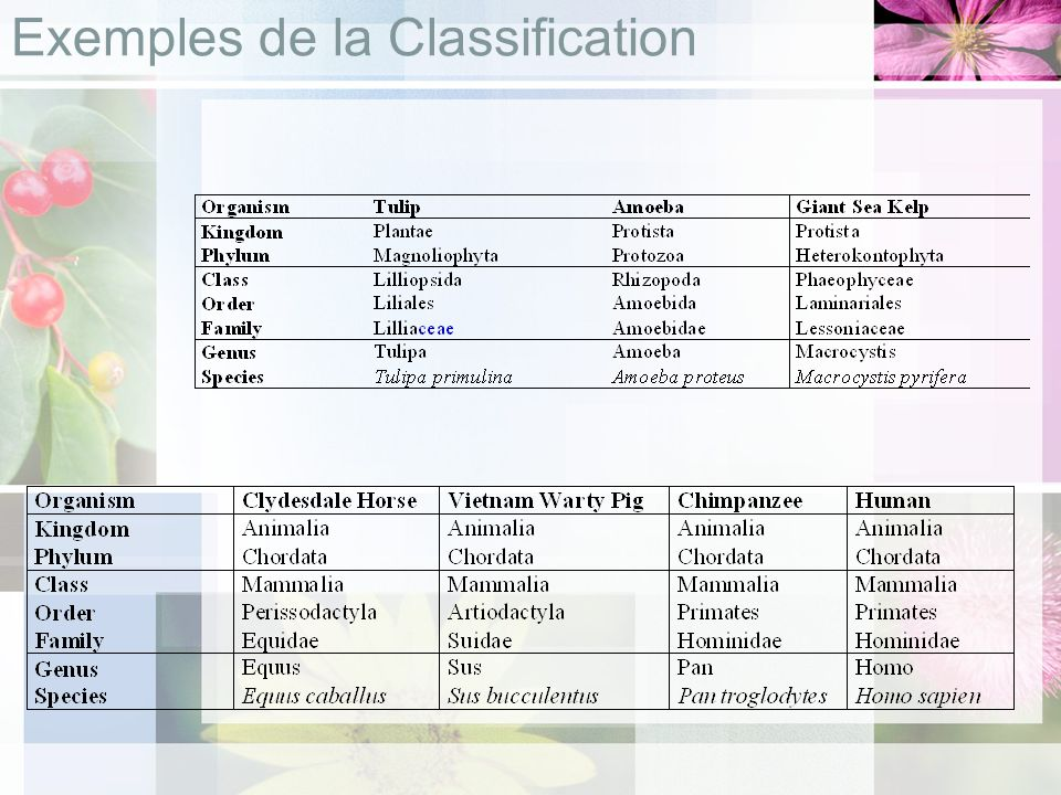 Exemples de la Classification