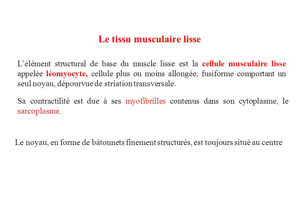 Le tissu musculaire lisse