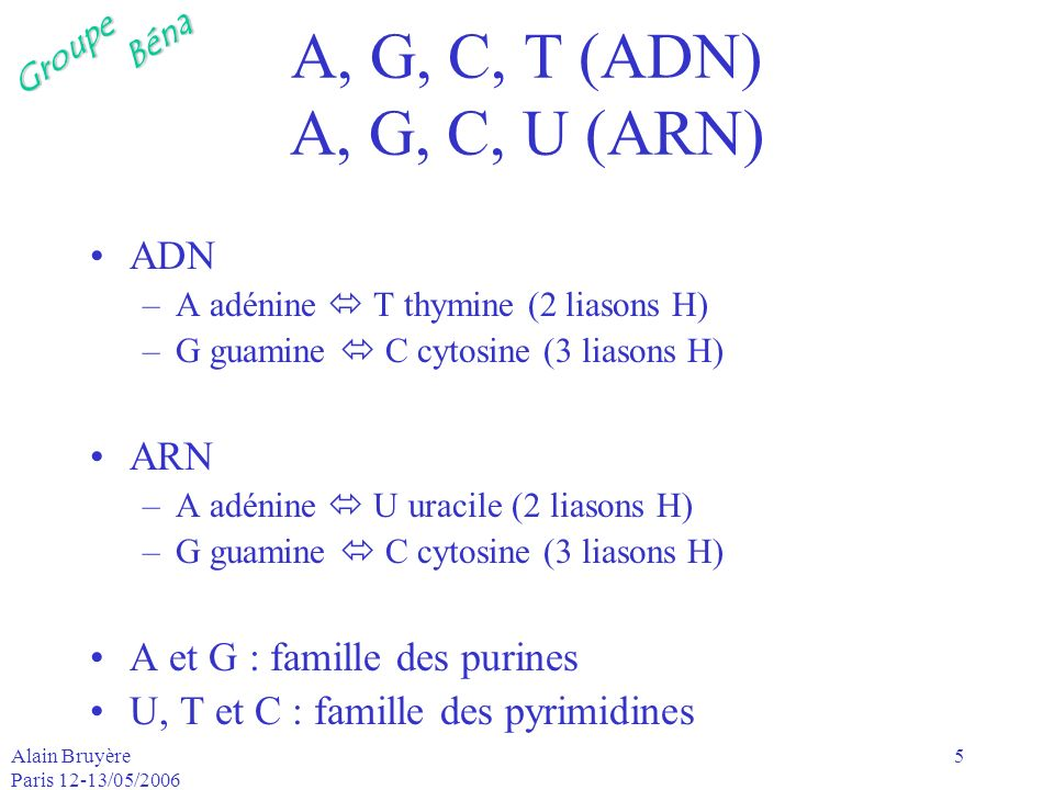 A, G, C, T (ADN) A, G, C, U (ARN) ADN ARN A et G : famille des purines