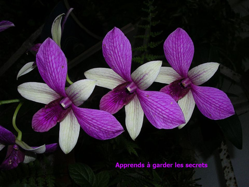 Apprends à garder les secrets