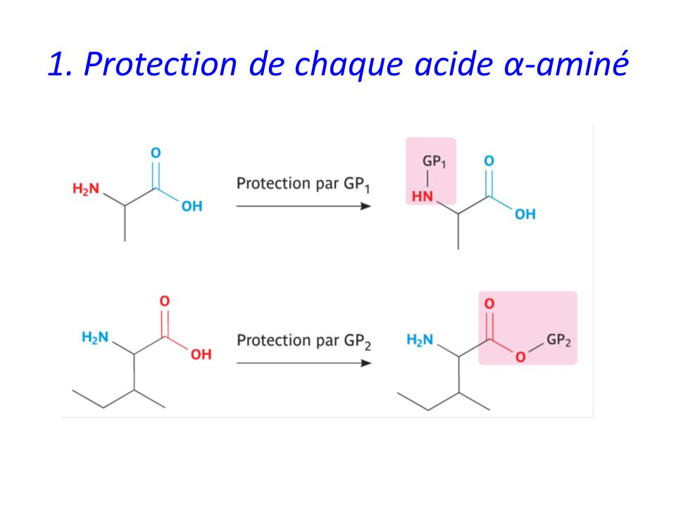 1. Protection de chaque acide α-aminé