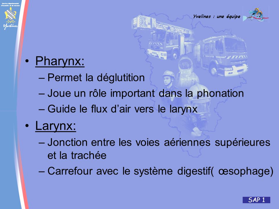 Pharynx: Larynx: Permet la déglutition