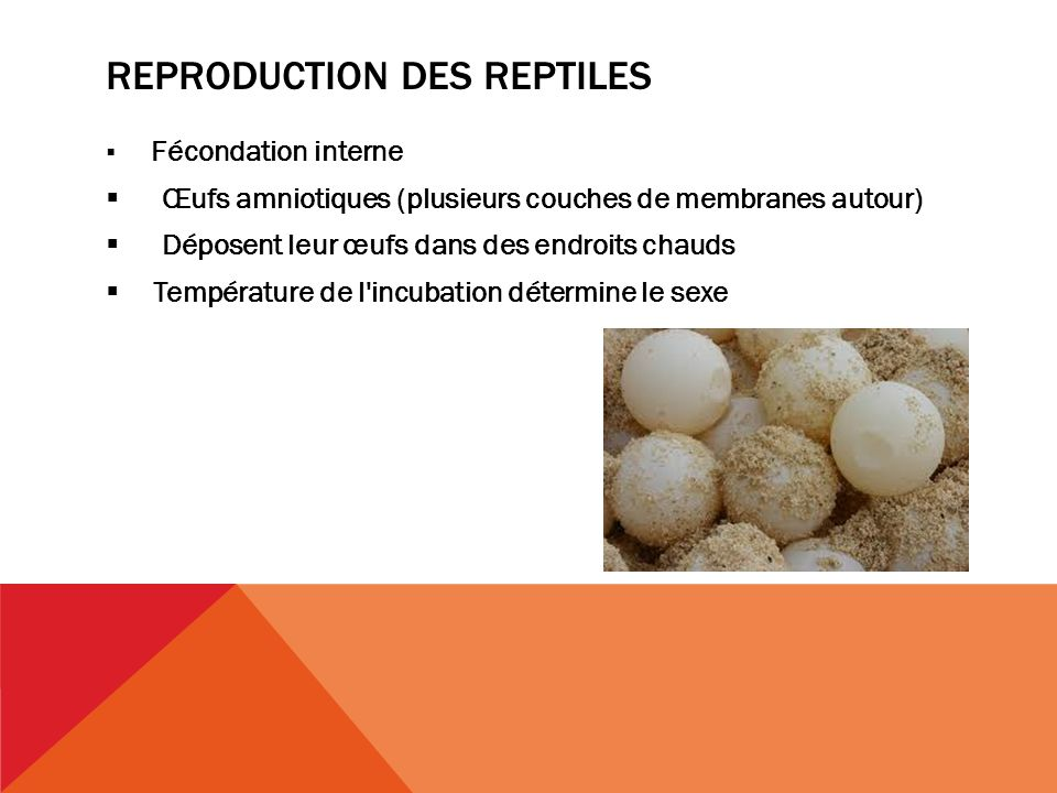 Reproduction des reptiles