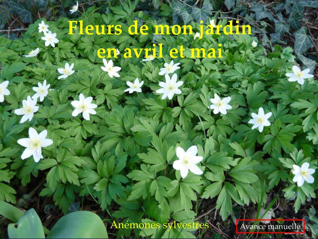Fleurs de mon jardin en avril et mai - ppt télécharger
