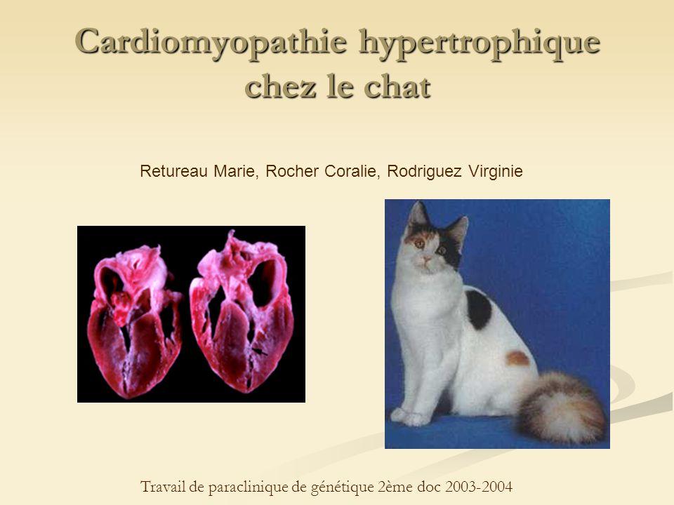pression artérielle normale chat