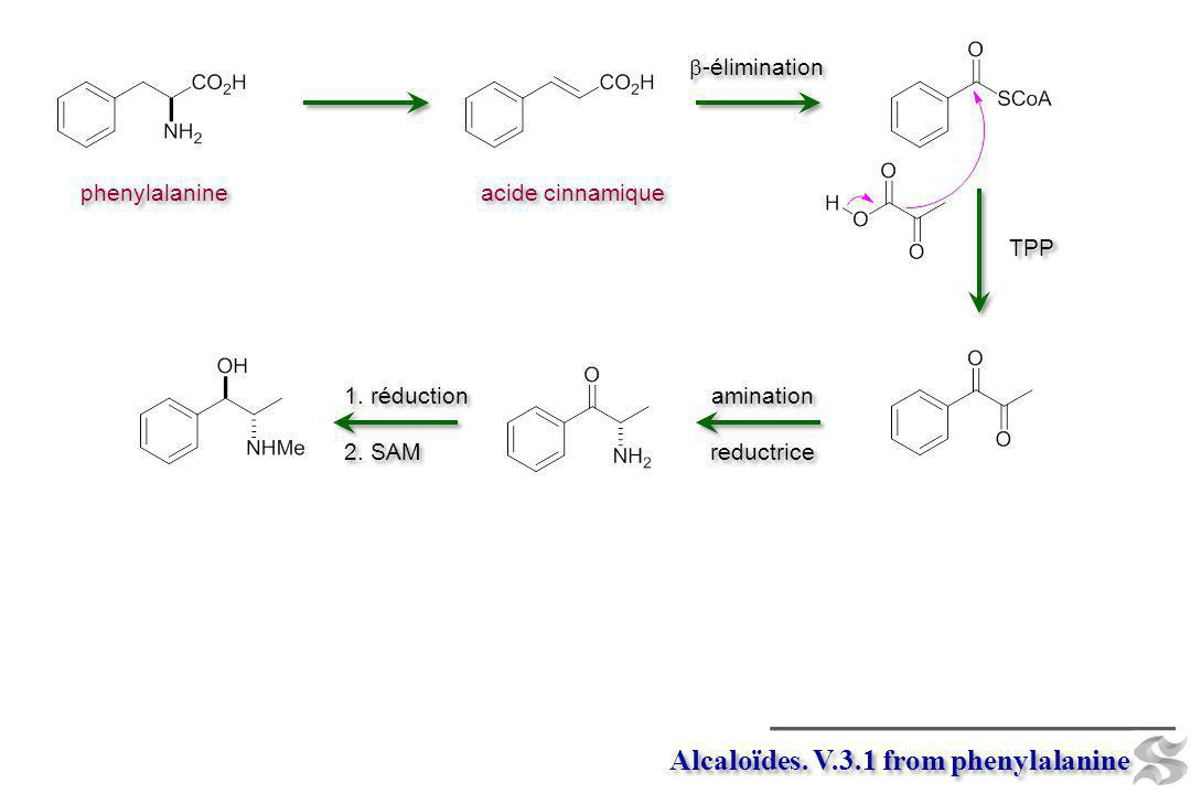 Alcaloïdes. V.3.1 from phenylalanine