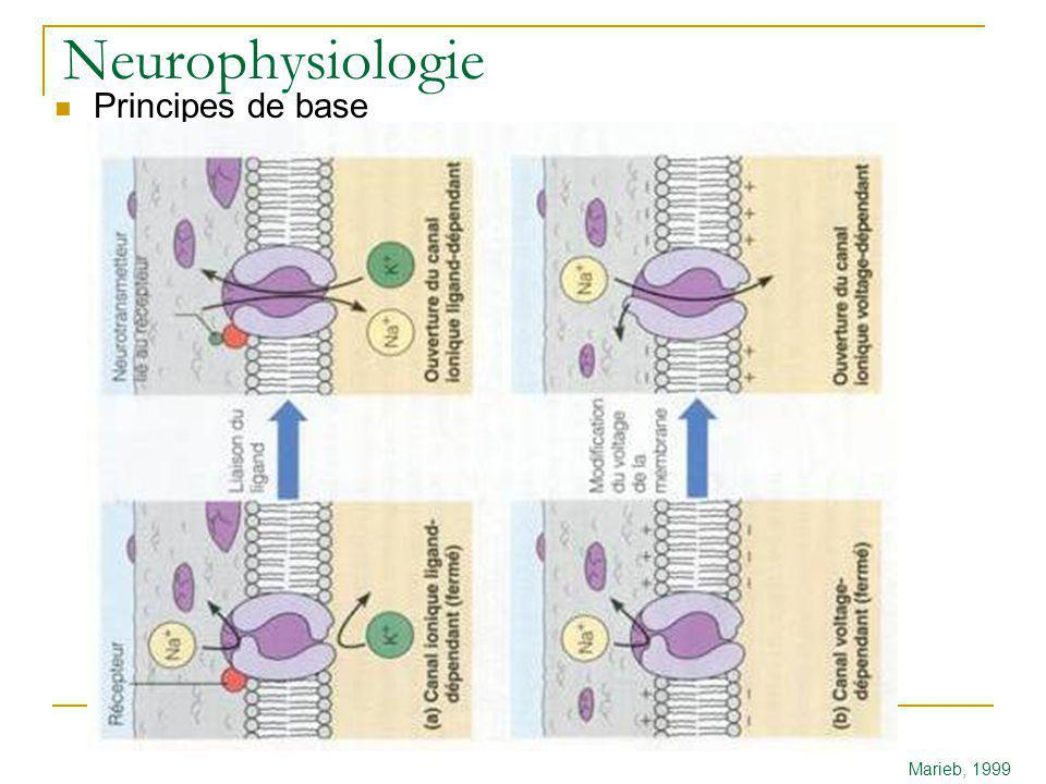 Neurophysiologie Principes de base Marieb, 1999