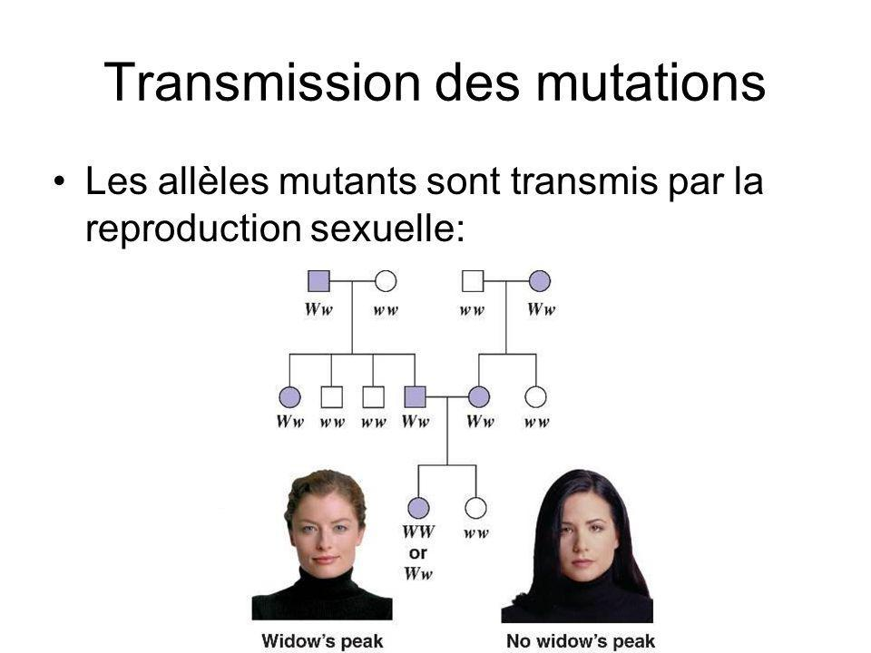 Transmission des mutations