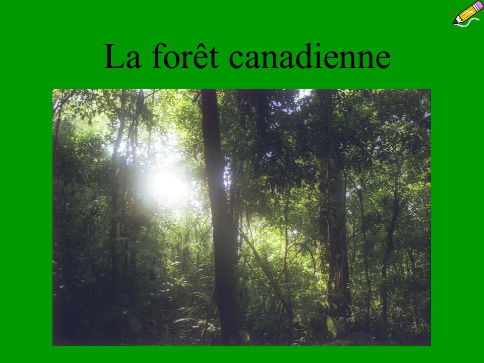 La forêt canadienne