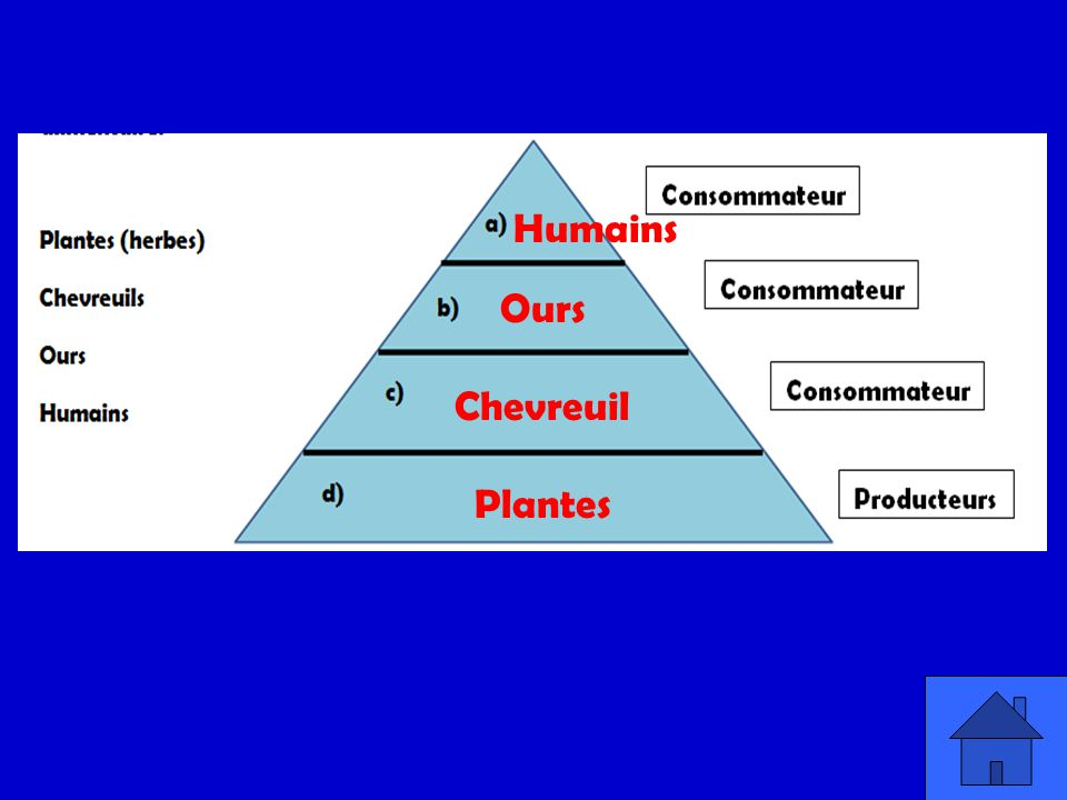 Humains Ours Chevreuil Plantes