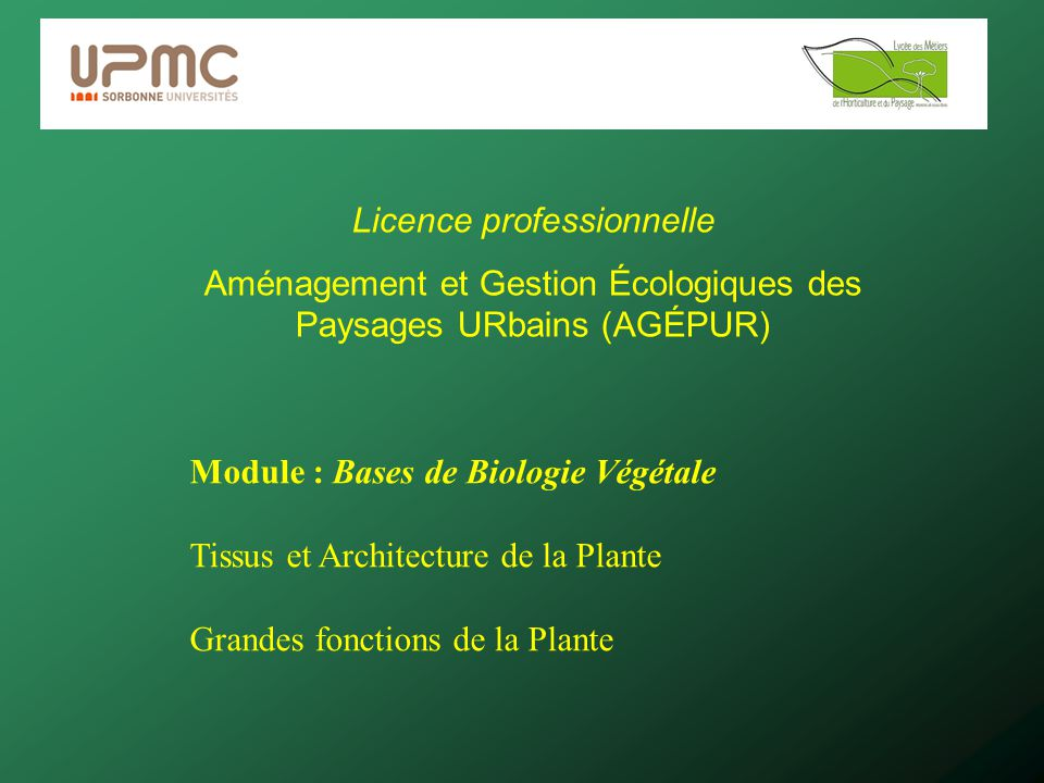 Licence professionnelle