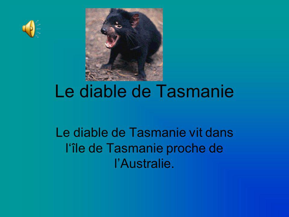 le diable de tasmanie le diable de tasmanie vit dans l le de tasmanie proche de l australie. Black Bedroom Furniture Sets. Home Design Ideas