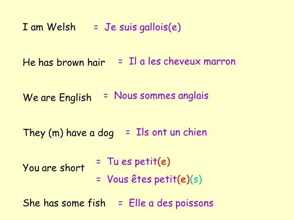 I am Welsh He has brown hair. We are English. They (m) have a dog. You are short. She has some fish.