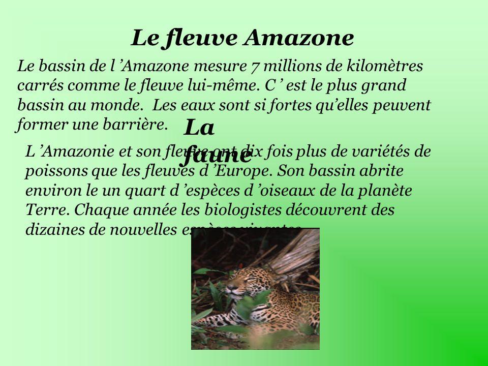 animaux flauve amazonie