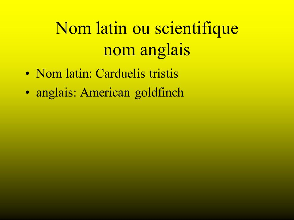Nom latin ou scientifique nom anglais