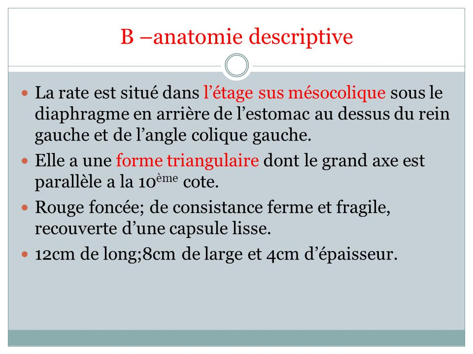 B –anatomie descriptive