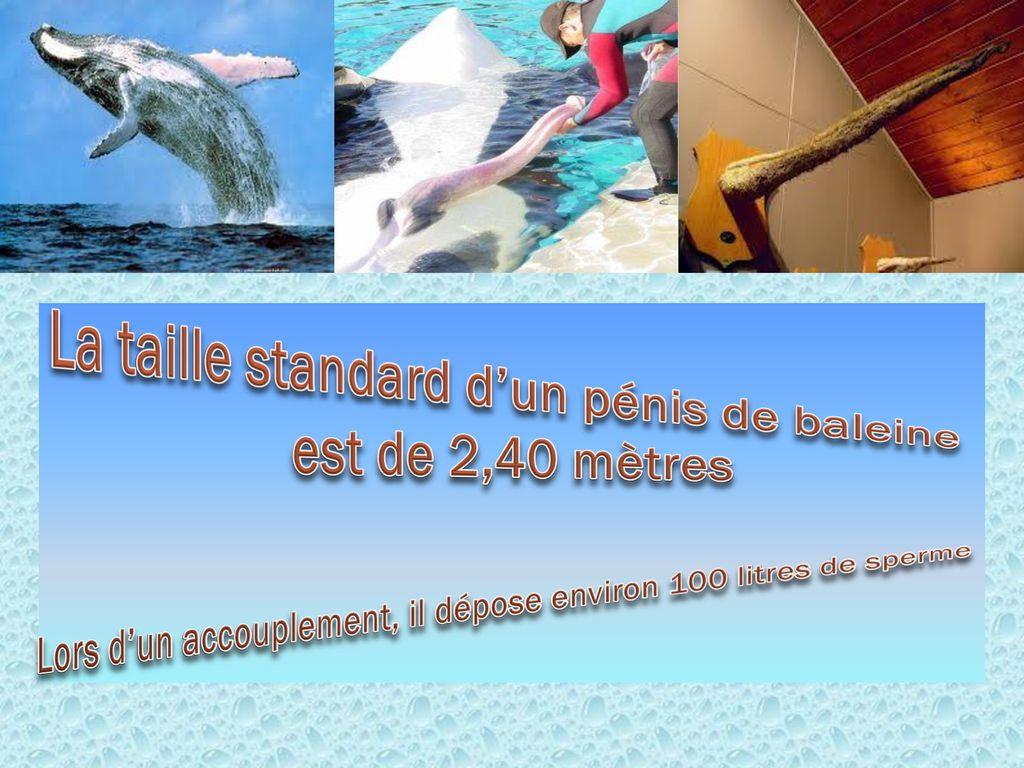 Quelle est la taille d'un pénis baleine