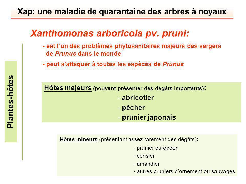 planter noyau abricotier
