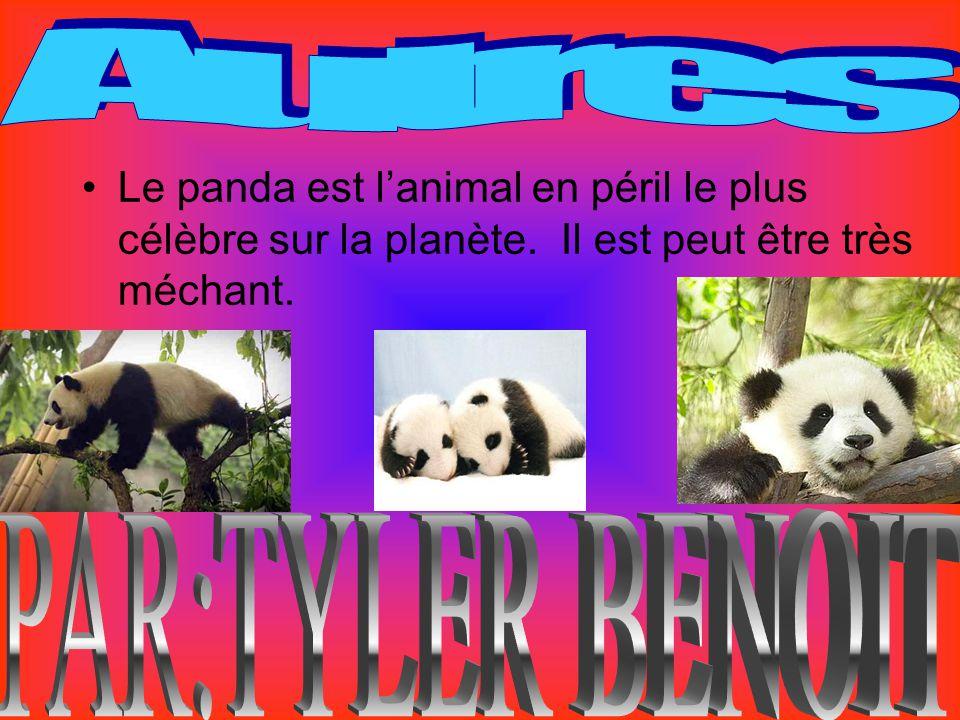 le panda g ant habitat nourriture pourquoi sont ils menac s ppt video online t l charger. Black Bedroom Furniture Sets. Home Design Ideas