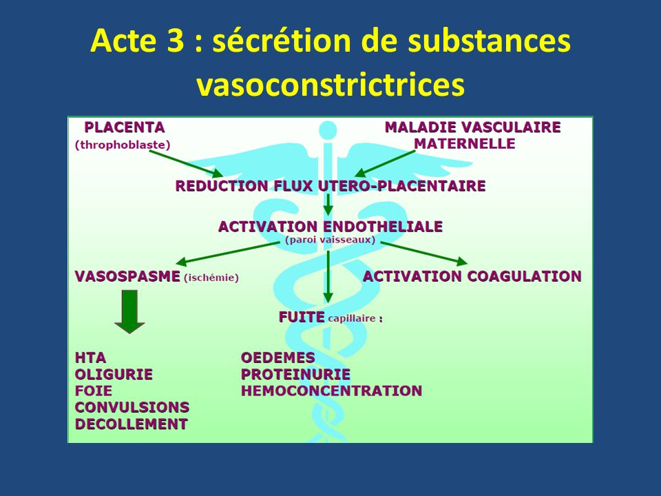 Acte 3 : sécrétion de substances vasoconstrictrices