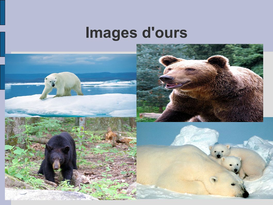 Images d ours