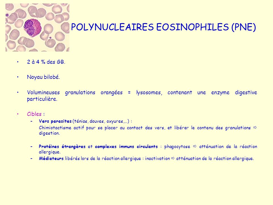 POLYNUCLEAIRES EOSINOPHILES (PNE)