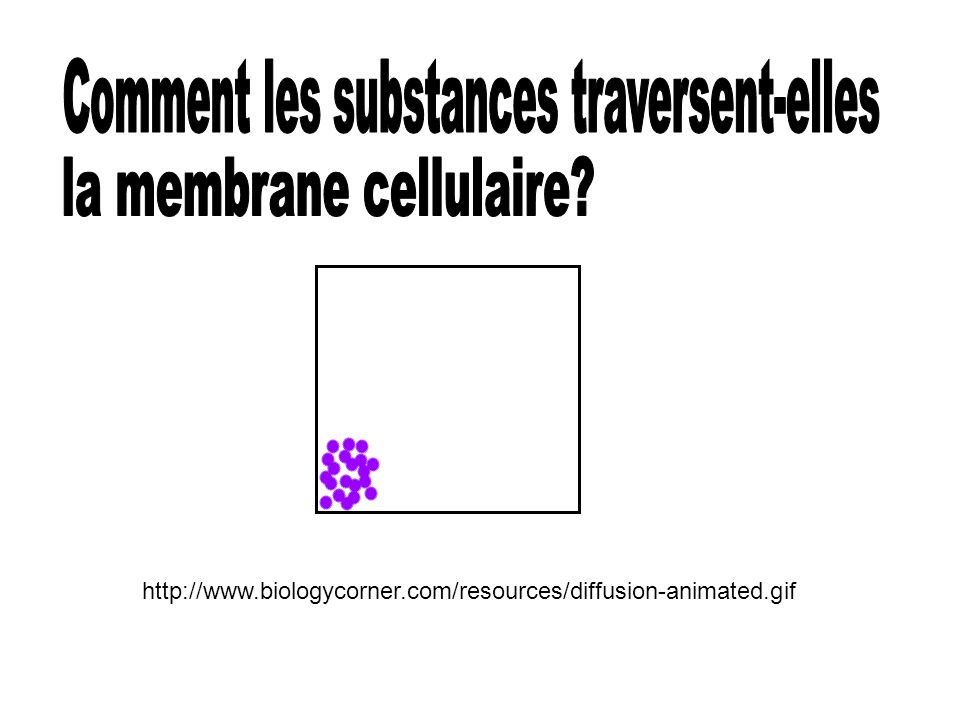 Comment les substances traversent-elles