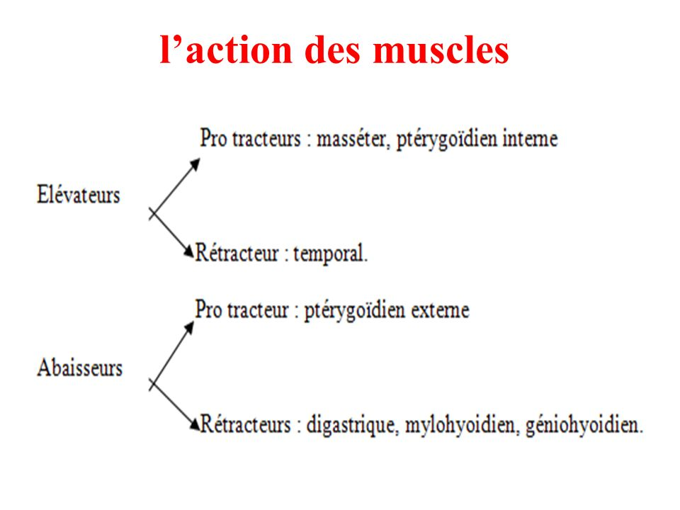 l'action des muscles