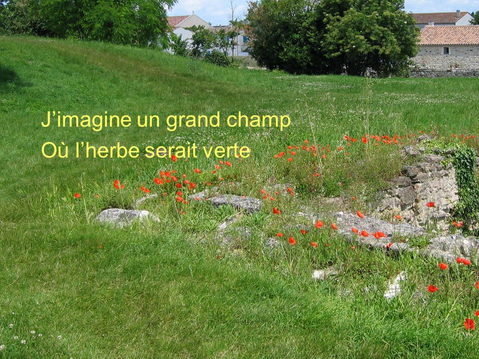 J'imagine un grand champ Où l'herbe serait verte