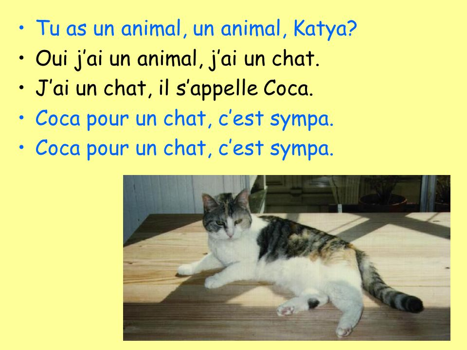 Tu as un animal, un animal, Katya