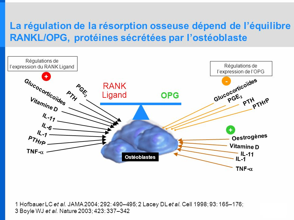 l'expression du RANK Ligand