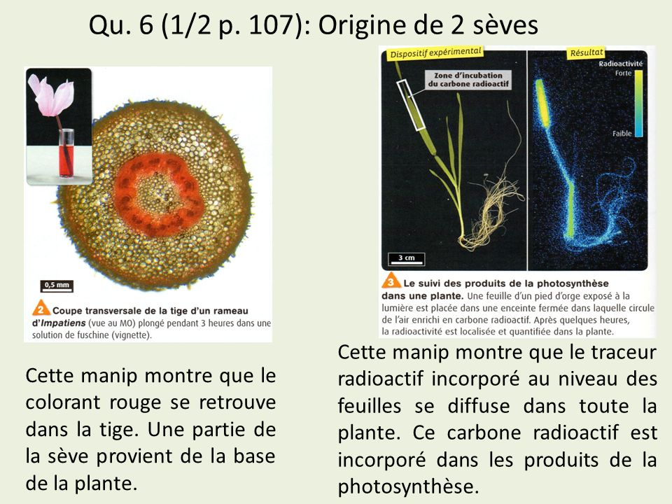 Qu. 6 (1/2 p. 107): Origine de 2 sèves