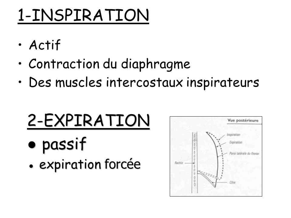 1-INSPIRATION 2-EXPIRATION ● passif Actif Contraction du diaphragme