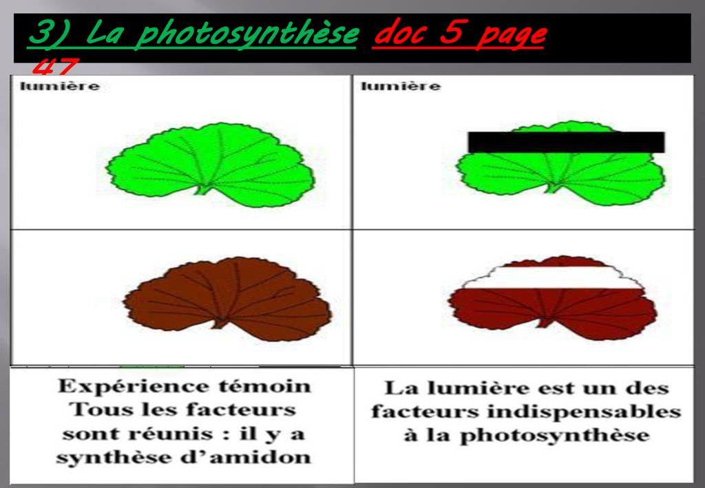 3) La photosynthèse doc 5 page 47