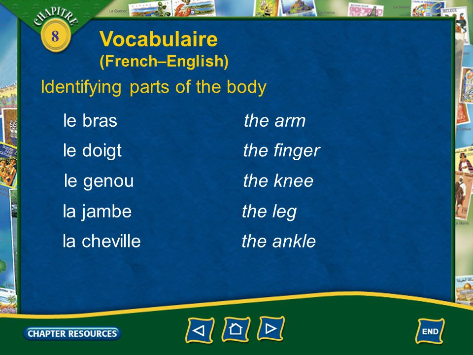 Vocabulaire Identifying parts of the body le bras the arm le doigt